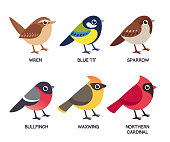 Small birds set