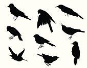 Small Birds Vector Silhouette