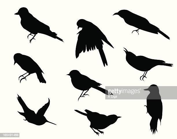 illustrazioni stock, clip art, cartoni animati e icone di tendenza di smallbirds - tordo bottaccio