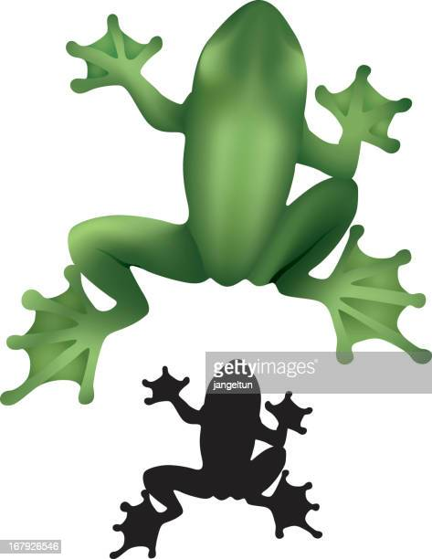 A small frog in black and a large frog in green