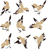 Small illustrated brown birds on white background