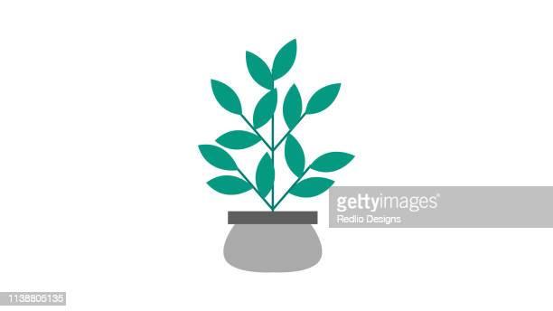 small plant icon - money tree stock illustrations, clip art, cartoons, & icons