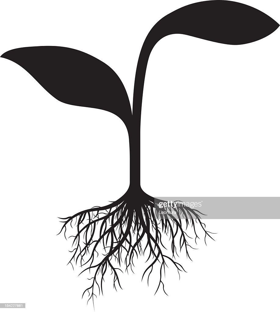 Small Plant Vector Art   Getty Images