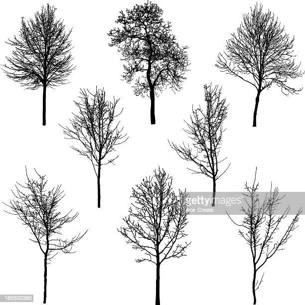 small tree and sapling silhouettes - bare tree stock illustrations