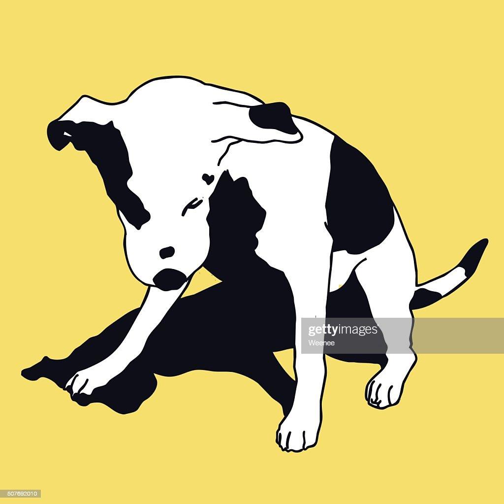 Smart black and white dog on color. Lovely darling pet.