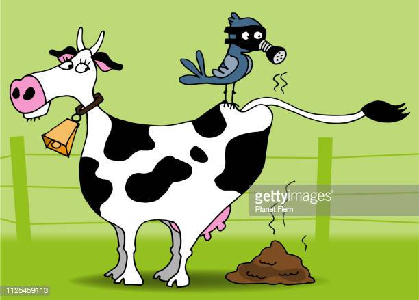 Smelly cow