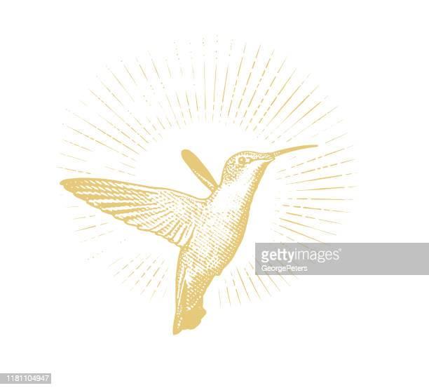 illustrations, cliparts, dessins animés et icônes de colibri à gorge de rubis de sourire - gravure