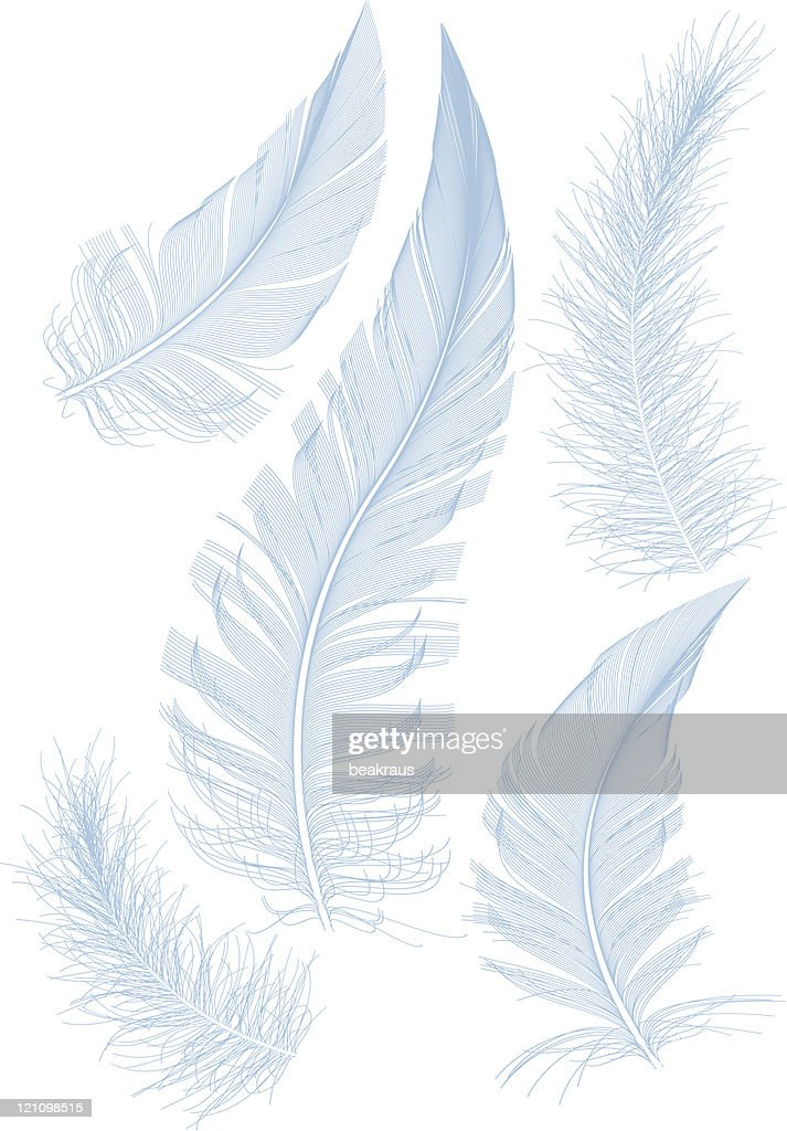 smooth blue feather