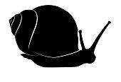 Snail crawling black silhouette on white