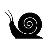Snail icon on white background
