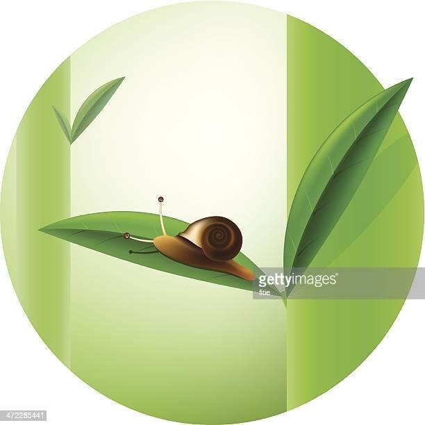 ilustrações de stock, clip art, desenhos animados e ícones de caracol - caracol de jardim