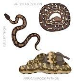 Snake African Python Set Cartoon Vector Illustration