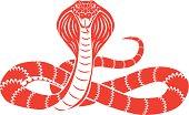 snake cobra front