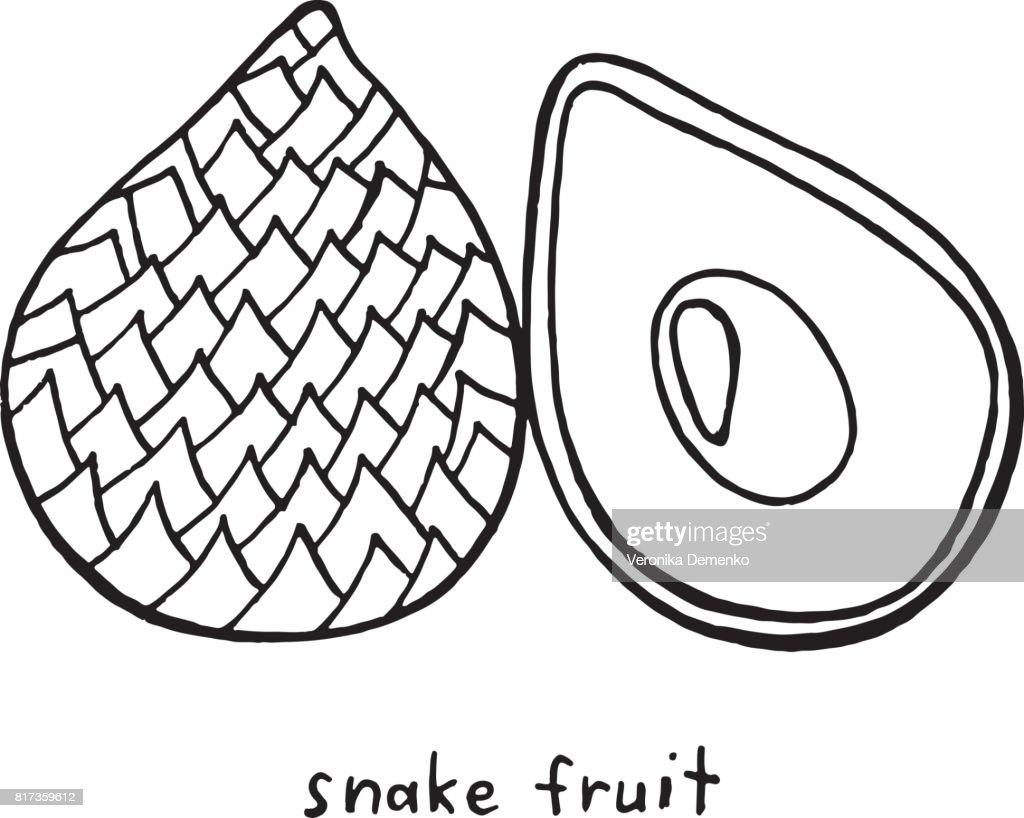 Kleurplaten Van Fruit.Snake Fruit Kleurplaat Zwartwit Grafische Vector Kunst Voor Boeken