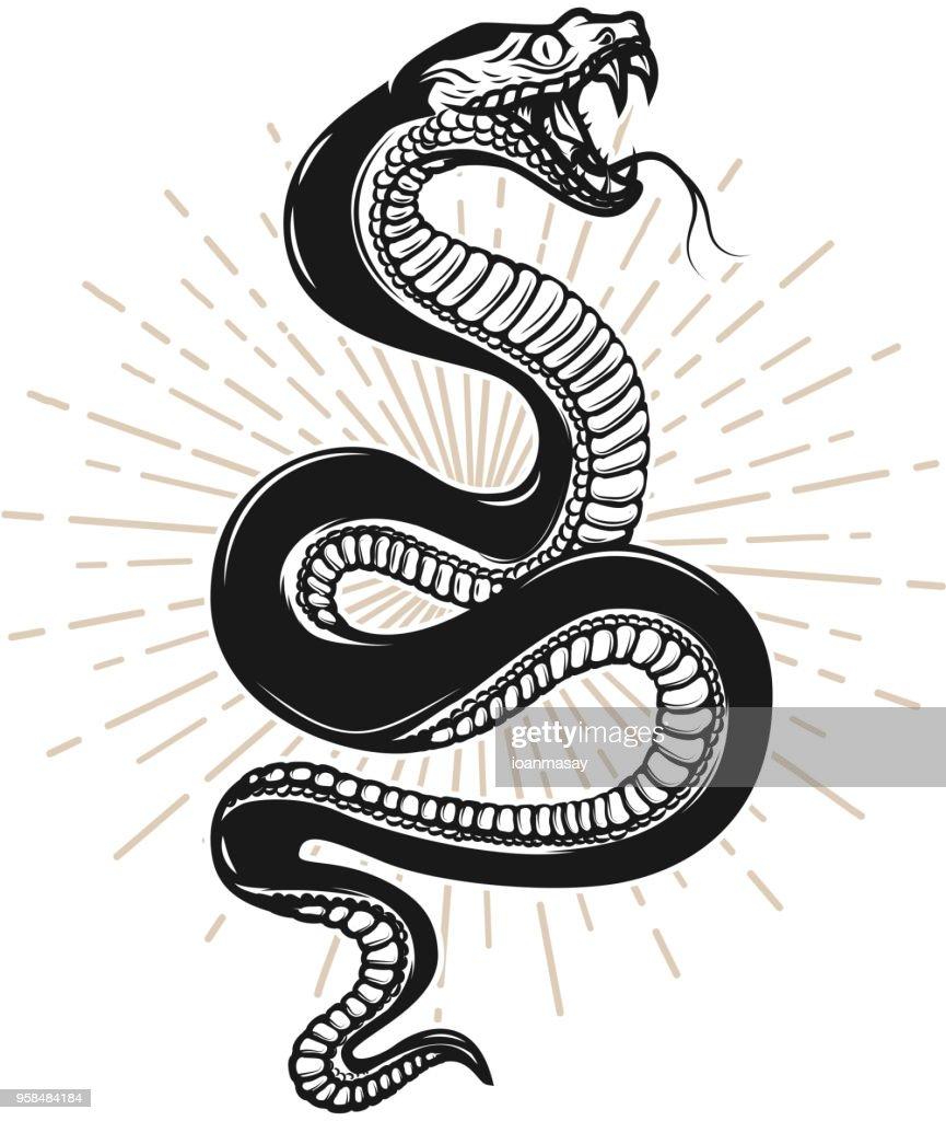 Snake illustration on white background. Design element for poster, t shirt, emblem, sign.