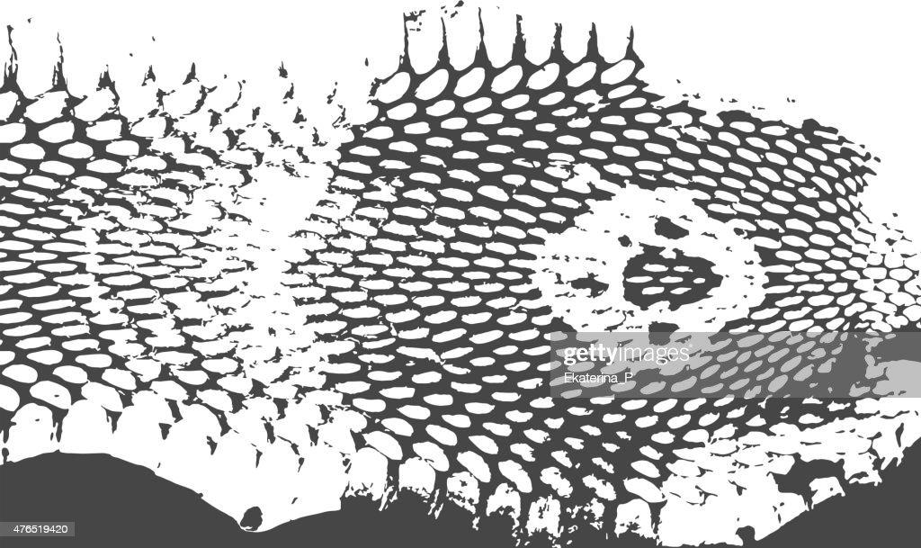 Snake skin abstract texture, cobra head. black on white background.