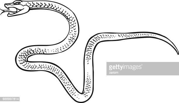 ilustrações, clipart, desenhos animados e ícones de cobra - réptil