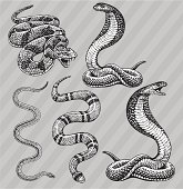 Snakes - Cobra, Kingsnake, Rattlesnake and Garter
