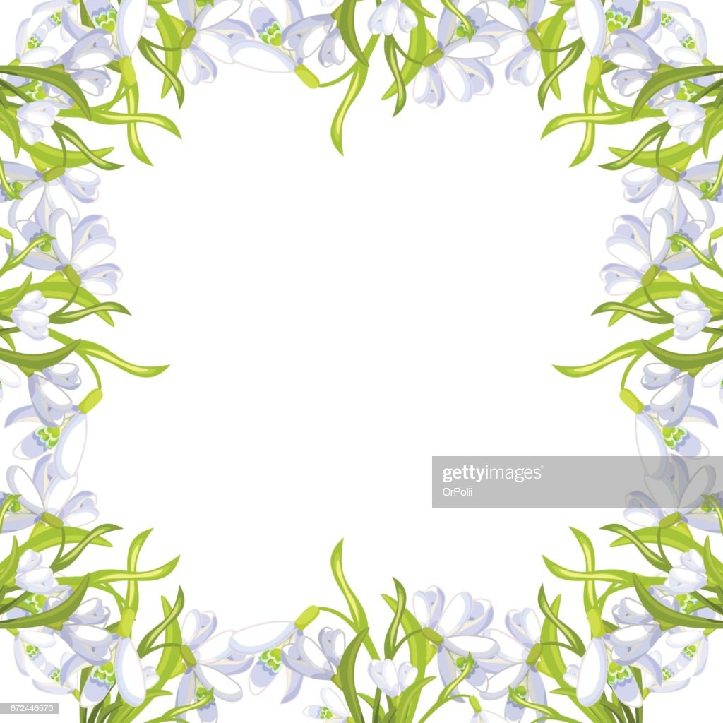 snowdrop flower blossomed with leaves. Vector illustration