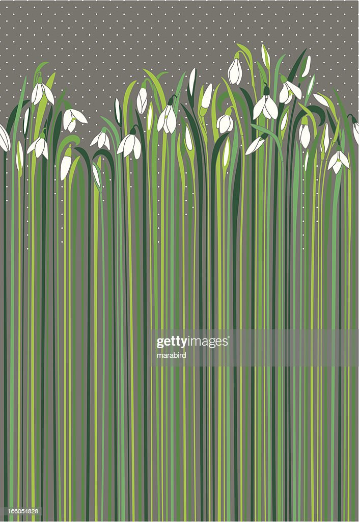 Snowdrops nuances of green and grey like rainy day