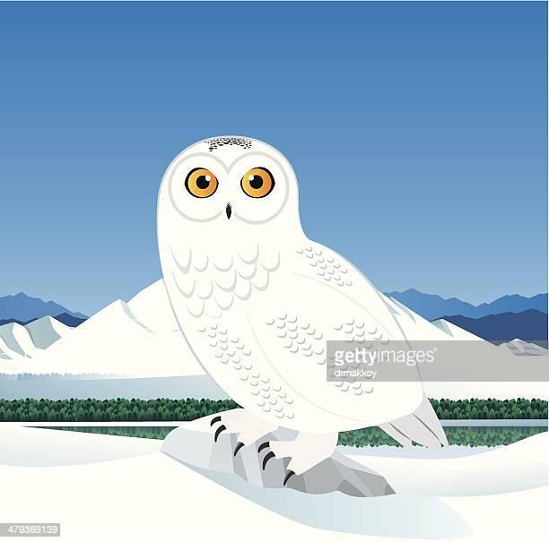 snowy owl - snowy owl stock illustrations