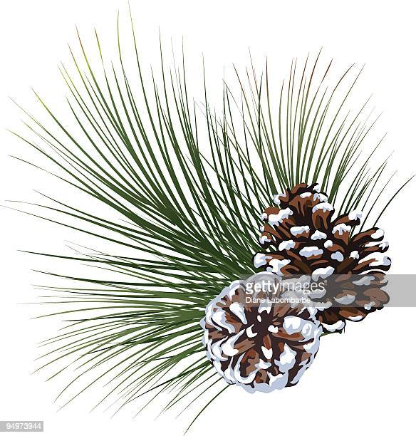 snowy pine evergreen sprig with pinecones isolated on white - pine cone stock illustrations, clip art, cartoons, & icons
