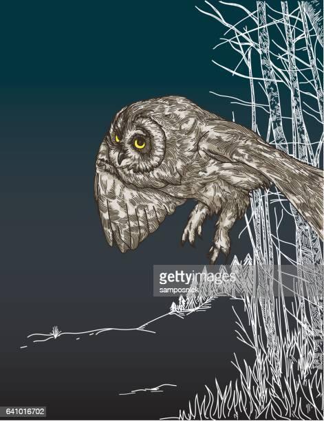 Soaring Owl on Blue