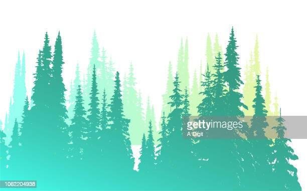 soft green pines - treelined stock illustrations, clip art, cartoons, & icons