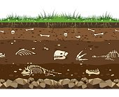 Soil with dinosaur bones