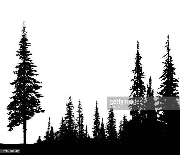 solitary pine - spruce tree stock illustrations