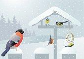 Songbirds in winter on a birdhouse
