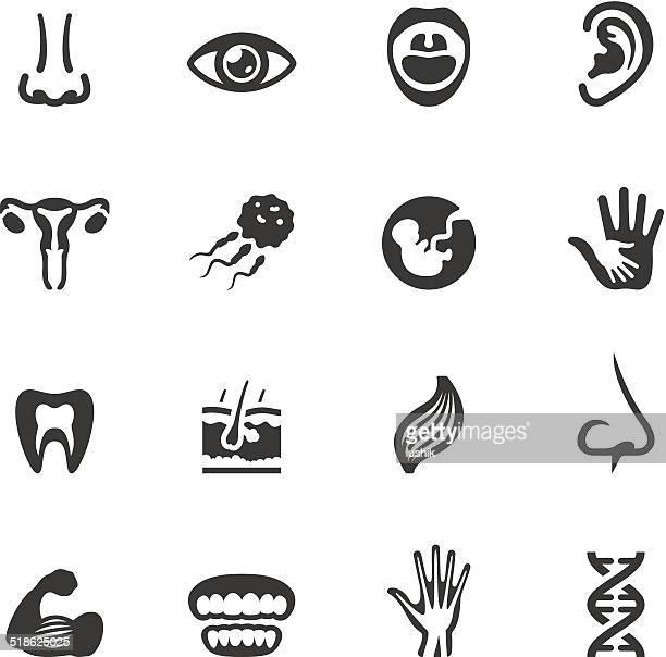 Soulico icons-Anatomy