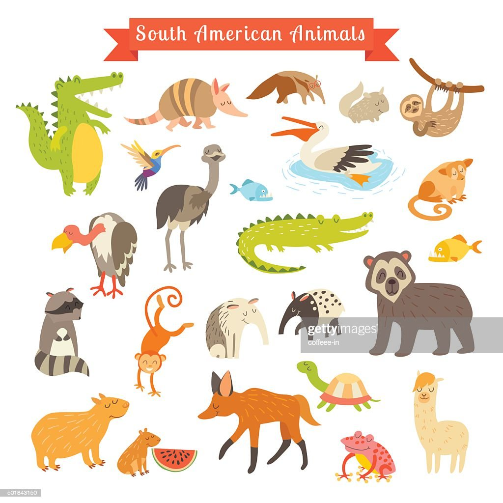 Sourth America animals  vector illustration. Big vector set