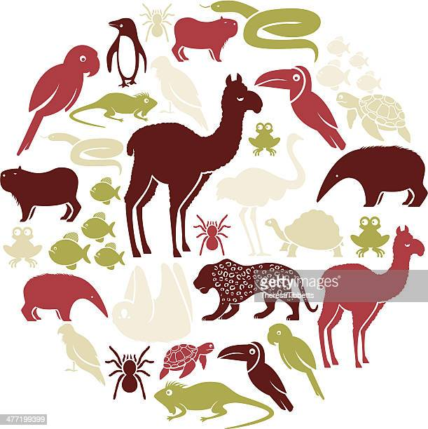 south american tier icon-set - anteater stock-grafiken, -clipart, -cartoons und -symbole