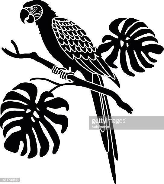 Ara Perroquet sud-américain, en noir et blanc