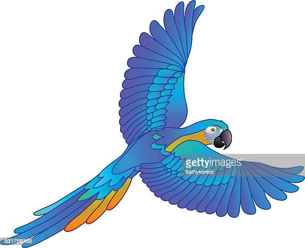 South American forêt tropicale bleu et or Ara Perroquet volant