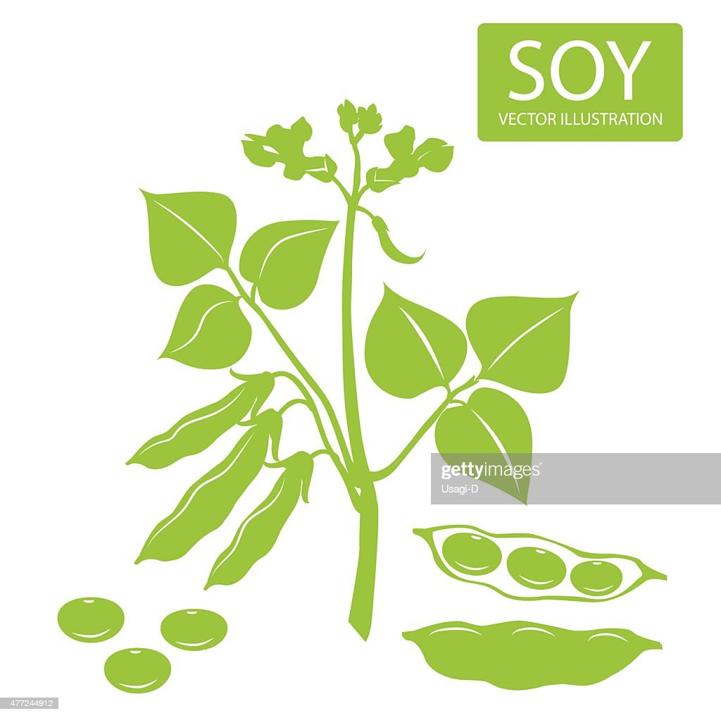 Soybeans silhouette. Vector illustrations set on a white background.