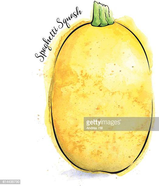 Spaghetti Squash Painted in Watercolor - Vector Illustration