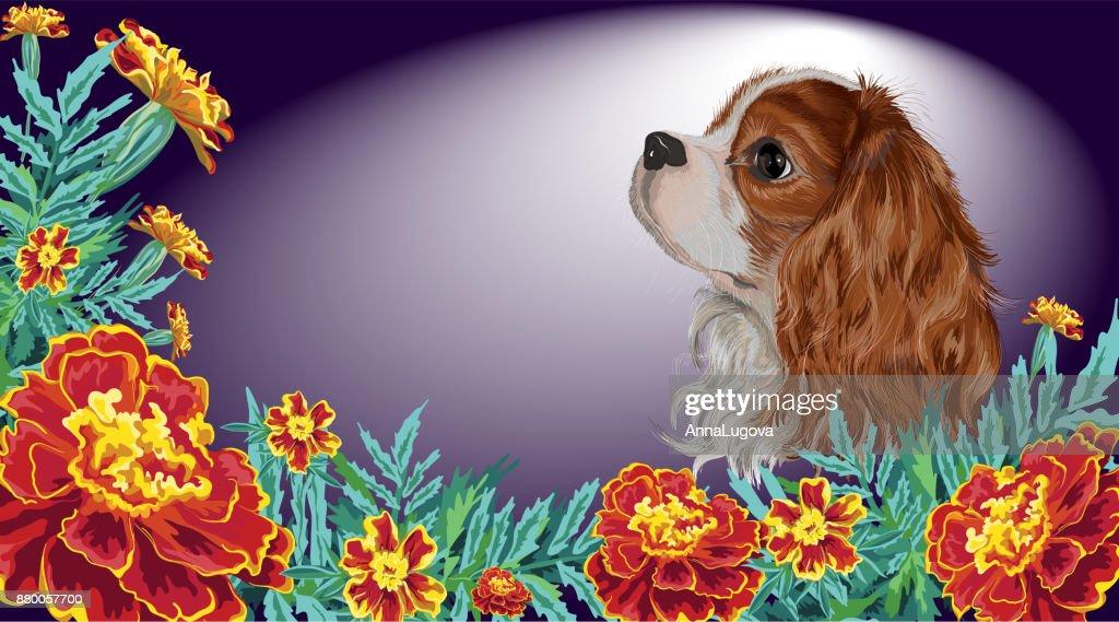 Spaniel dog realistic marigold dark