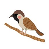Sparrow bird animal cartoon character vector illustration.