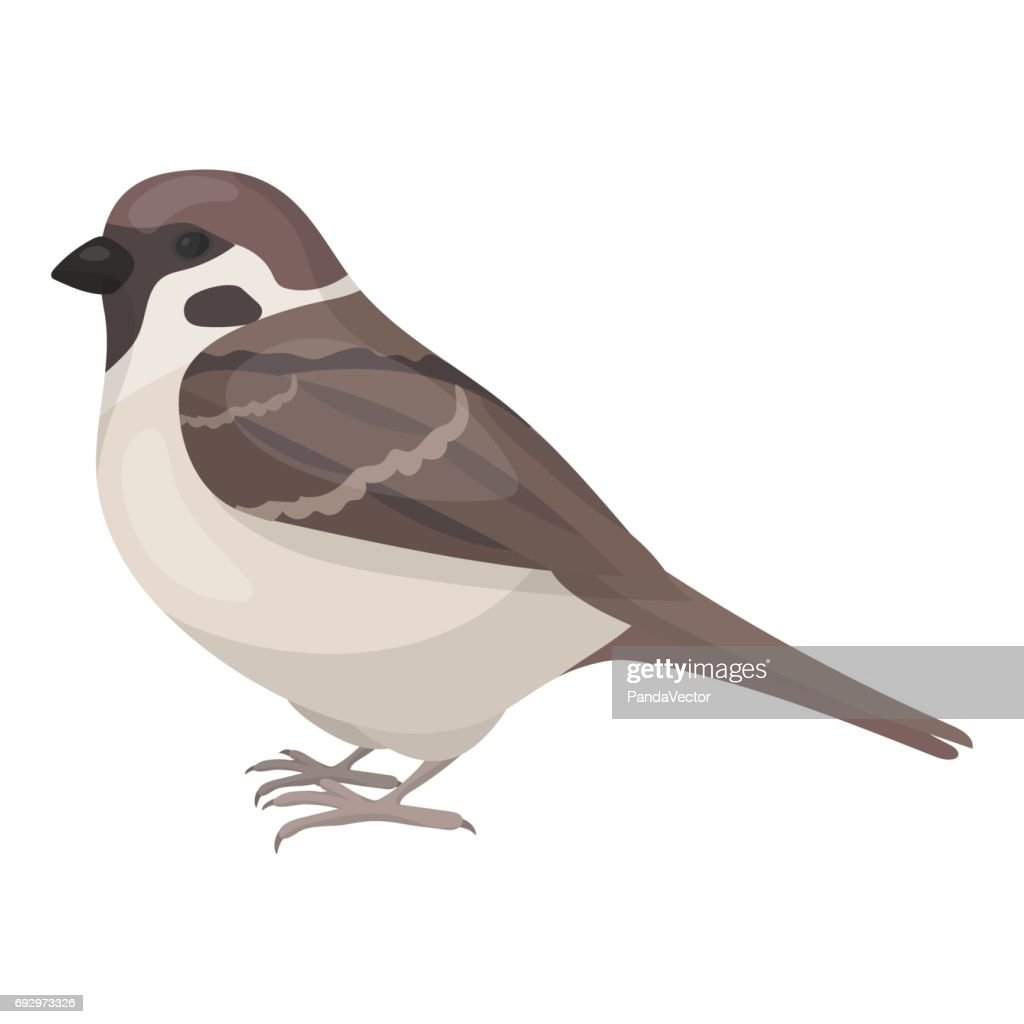 Sparrow Icon In Cartoon Style Isolated On White Background Bird
