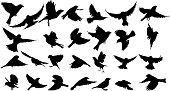 Sparrow Silhouette