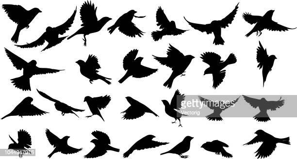 sperling silhouette - vogel stock-grafiken, -clipart, -cartoons und -symbole