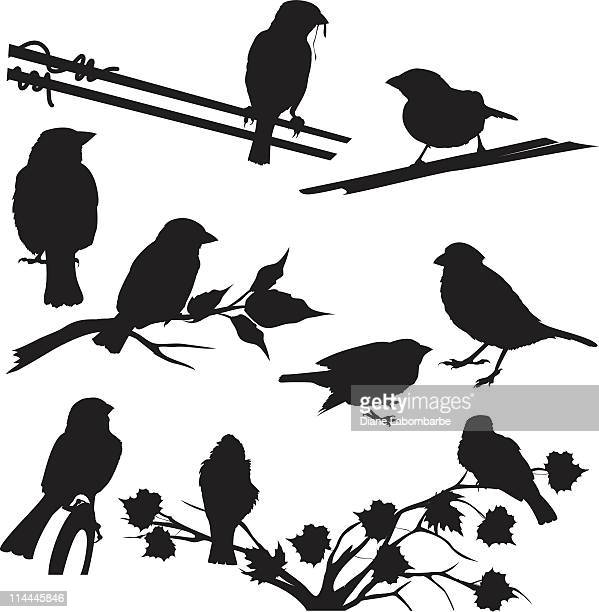 sparrow silhouettes set different poses and perches - songbird stock illustrations