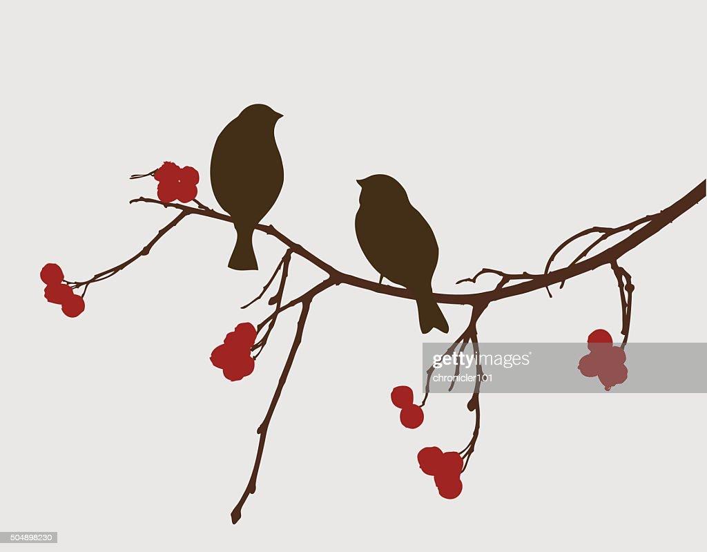 sparrows on a mountain ash branch