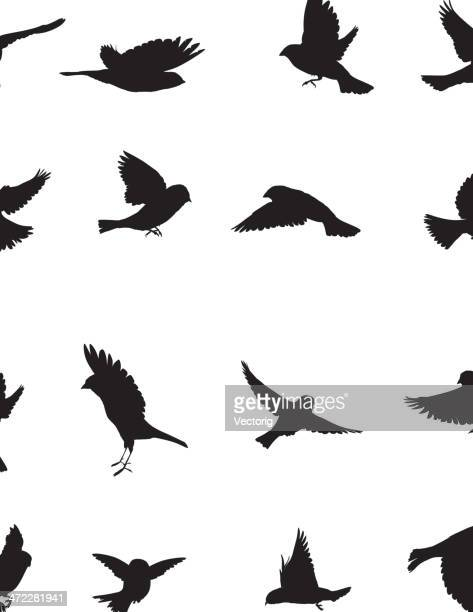 sparrows-silhouette - vogel stock-grafiken, -clipart, -cartoons und -symbole