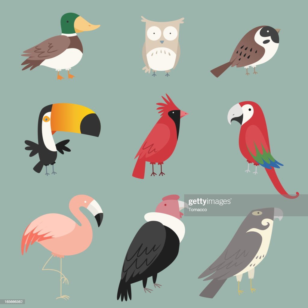 Species Bird collection