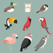 Species Bird collection