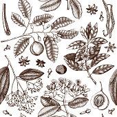 spice plants pattern