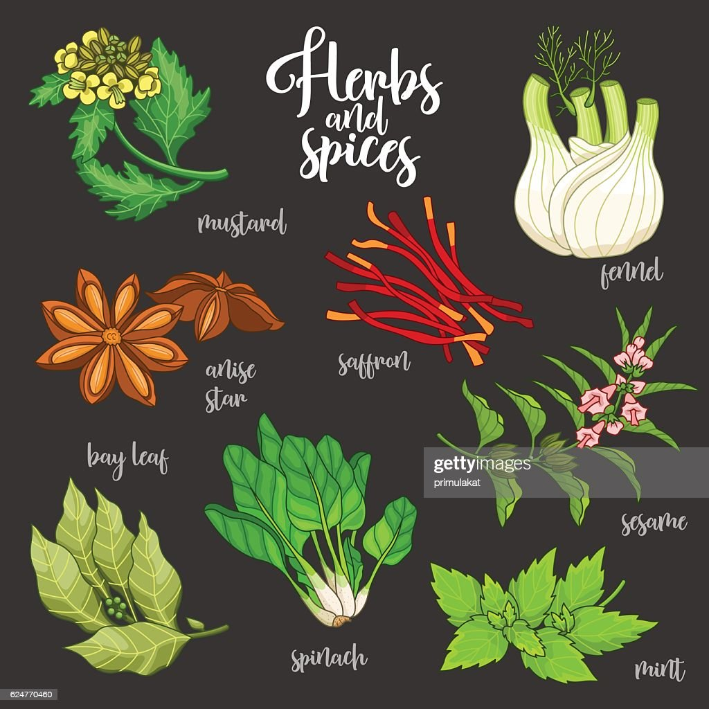 Spices and herbs vector set. Colored on dark